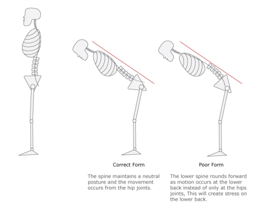 Hip-Hinge-Graphic